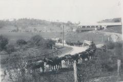 Bullock teams at Greengrove