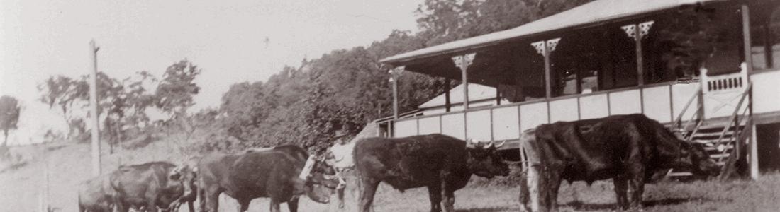 Bullock Teams